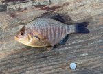 blackperch-crop-web.jpg