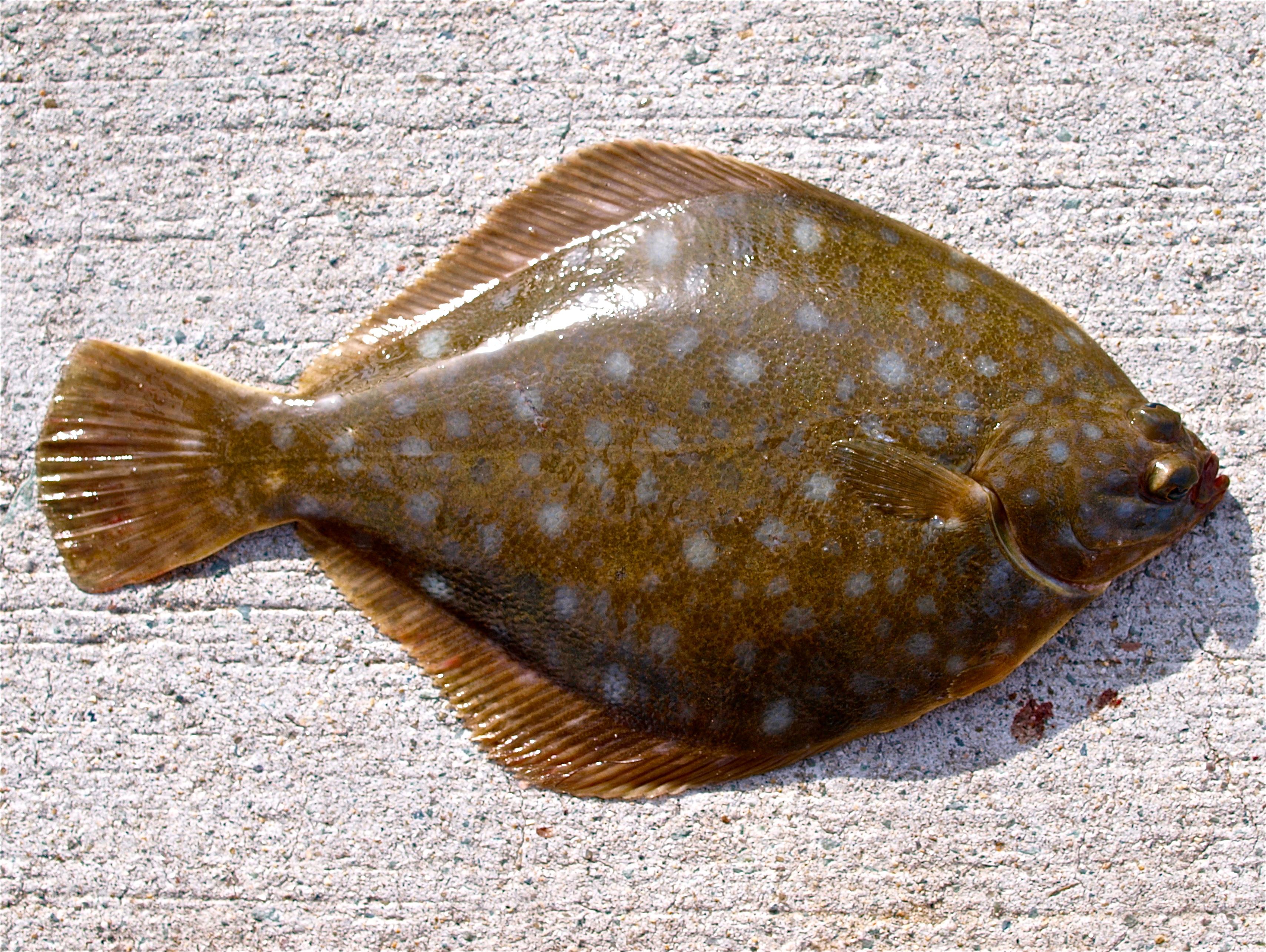 автосервисы рыба тюрбо фото такой наряд